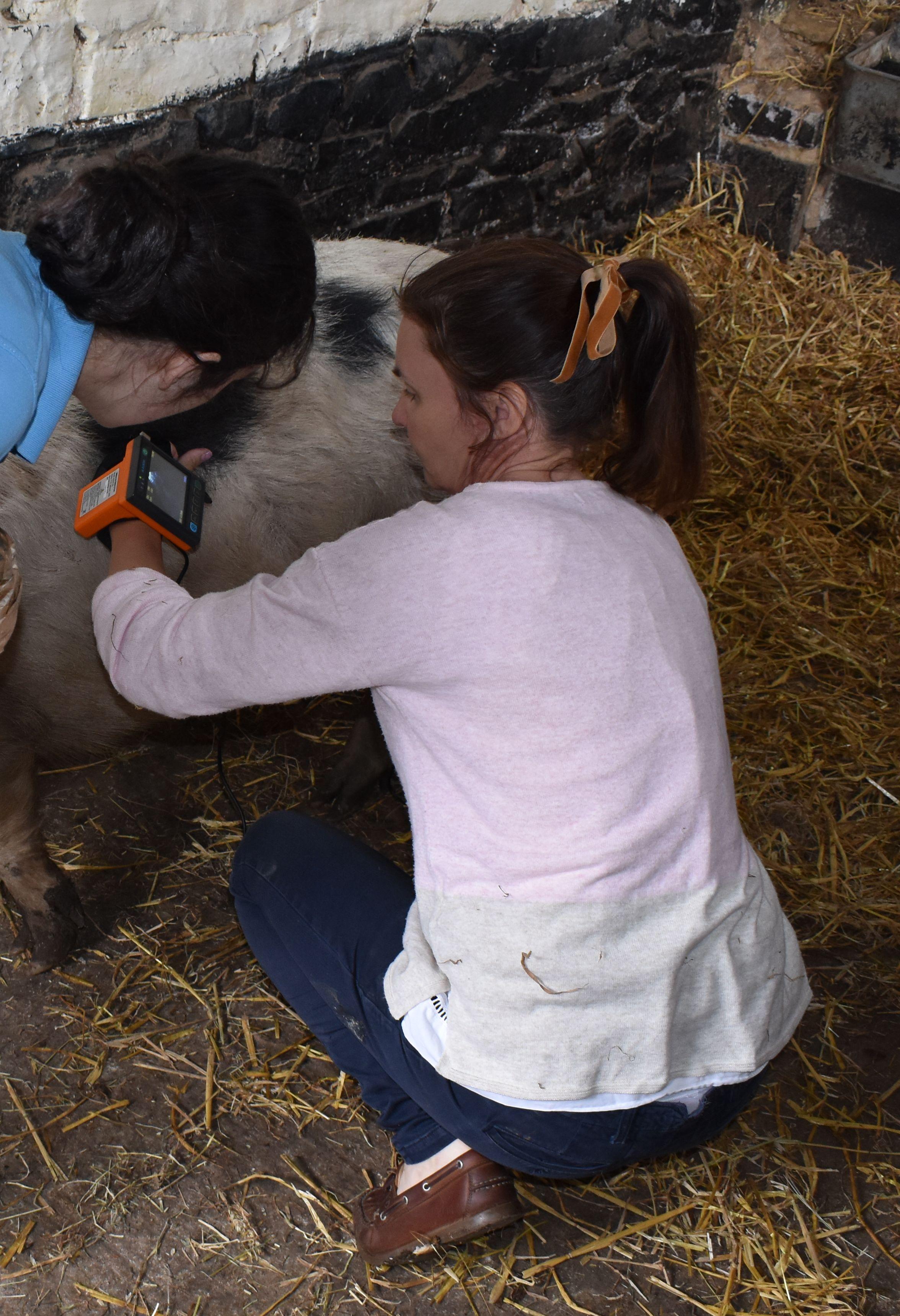 Sarah at Bassettwood Farms